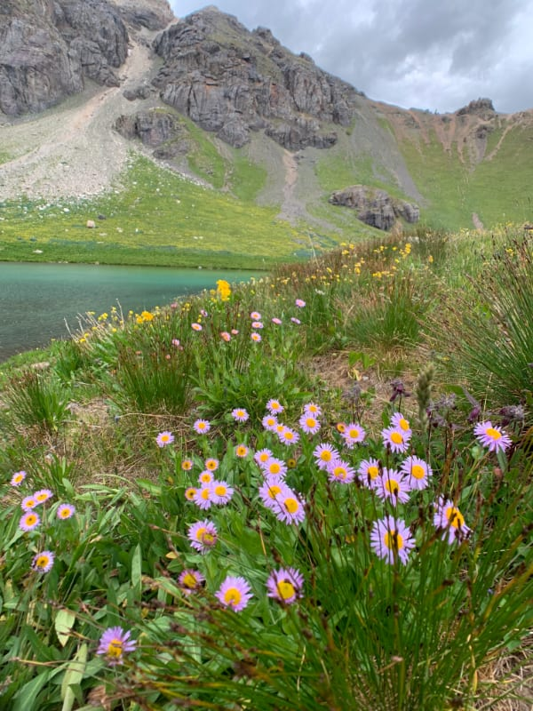 wildflowers in the middle of the lake near silverton colorado