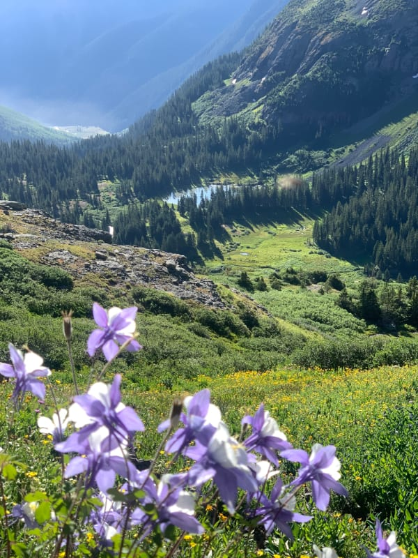 columbine flowers on ice lake trail in colorado