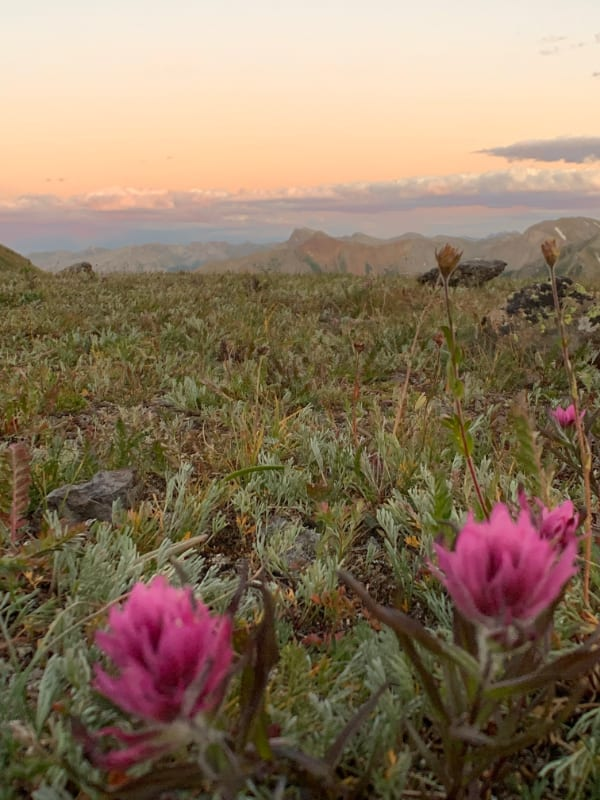 sunset and wildflowers in san juan nountains colorado