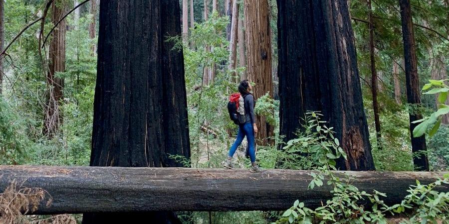 walking along redwood trees