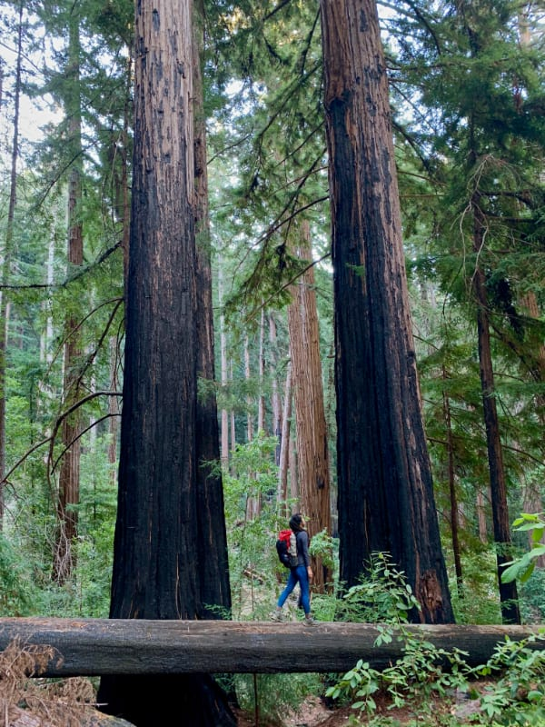 girl walking between redwoods
