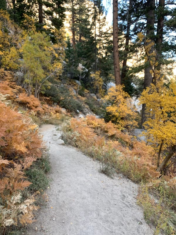 inyo national forest fall colors