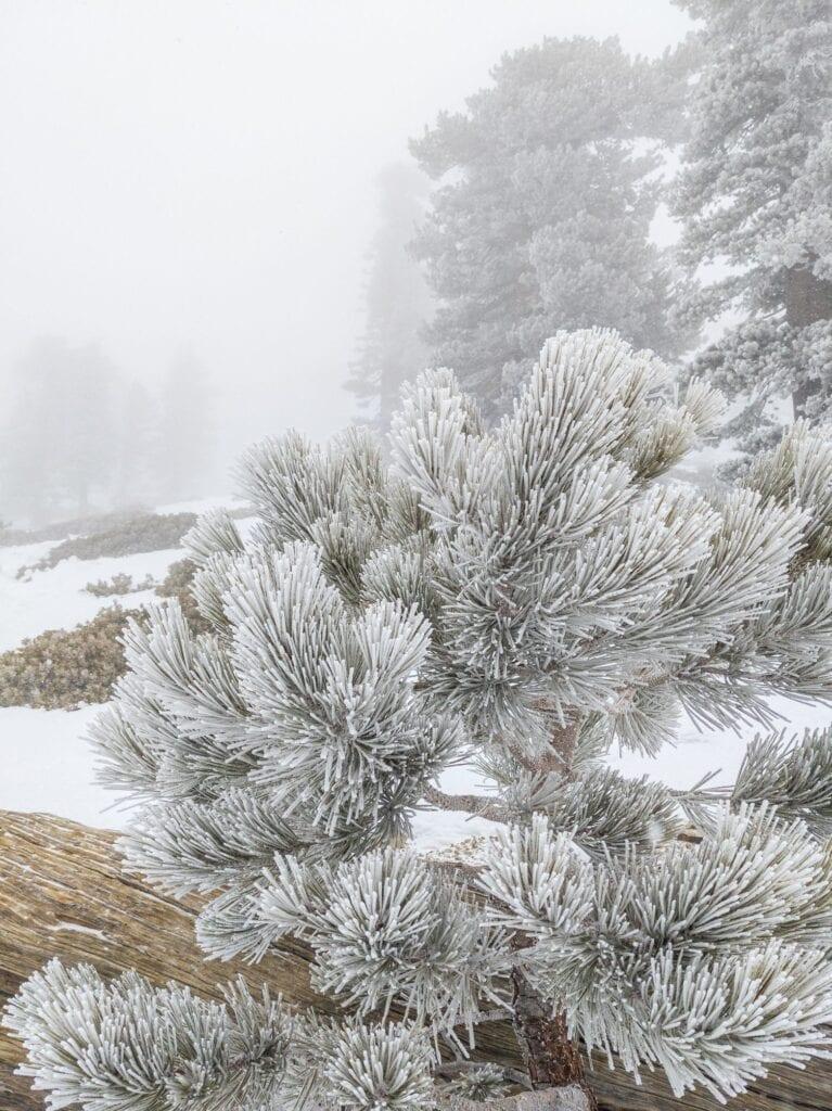 baldy winter snow
